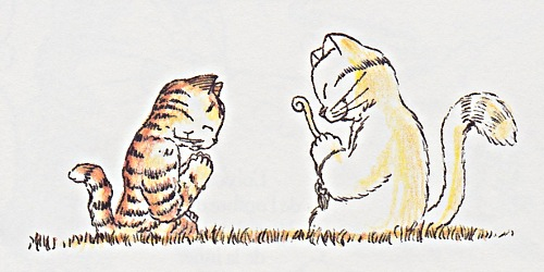 zen pour chats ch gaudin_35_0018