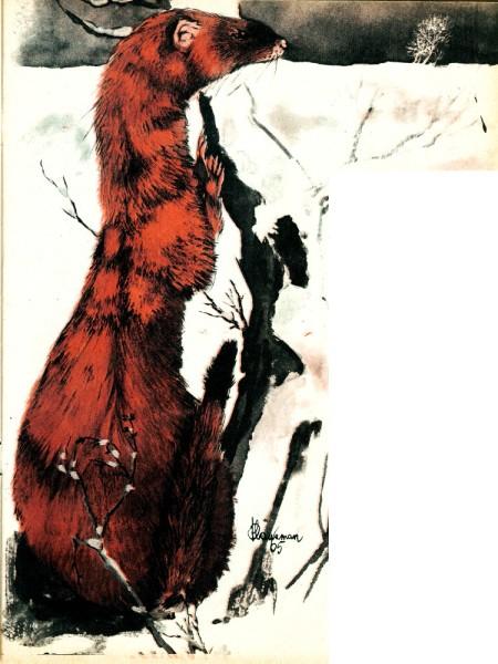 René Hausman 1965 Spirou 11